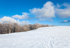 First winter snow and mountain beech forest Royalty Free Stock Image