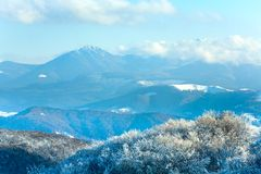 First winter snow and mountain beech forest Stock Photography