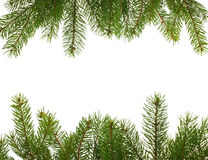 firtree κλάδων πλαίσιο Στοκ Φωτογραφία