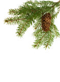 firtree κώνων κλάδων πλαίσιο Στοκ Εικόνες