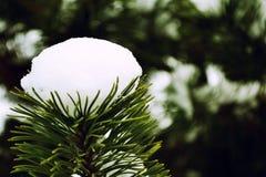 firtree χιόνι Στοκ εικόνα με δικαίωμα ελεύθερης χρήσης