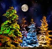 Firtree Χριστουγέννων Στοκ φωτογραφίες με δικαίωμα ελεύθερης χρήσης