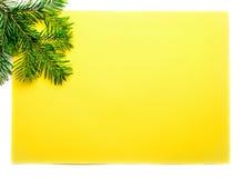 firtree Стоковые Фотографии RF