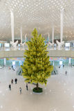 Firtree in ShenZhen airport Royalty Free Stock Image