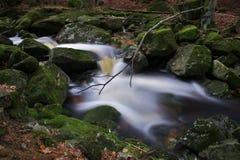 Firtree Stream, Jizera Mountains, Czech Republic Royalty Free Stock Images