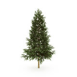 Firtree3. Isolated fir tree on the white background Royalty Free Stock Image