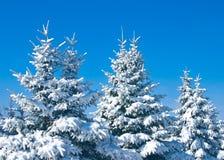 firtrees δασικός χιονώδης χειμών&a Στοκ Φωτογραφία