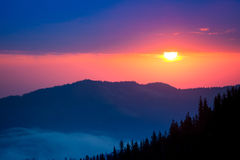 Firtrees in mountains on sunrise background Stock Images