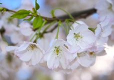 Firts sign of spring royalty free stock images