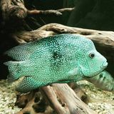 Fisch Image stock