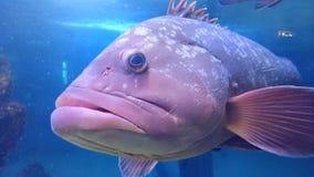 Fisch Fotografia Stock Libera da Diritti