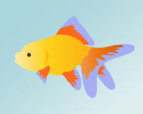 Fisch. Vector image of colourful golden fish. Sight of an aquarian small red fish goldenfish Stock Photo