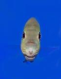 Fisch-Auge Lizenzfreie Stockbilder