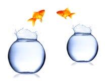 Fisch-Austausch lizenzfreies stockfoto
