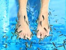Fisch-Badekurort Stockfotos