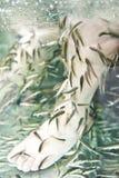 Fisch-Badekurort-Haut-Therapie Lizenzfreie Stockfotos