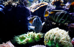 Fisch-Becken Stockfoto