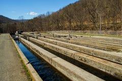 Fisch-Brutplatz - USA Stockbilder