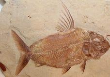 Fisch-Fossil Stockfotografie