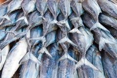 Fisch-Heck Stockfotos
