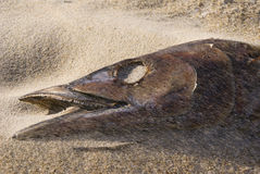 Fisch-Kopf Stockfoto