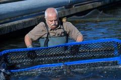 Fisch-Landwirt, der mit Netz arbeitet Lizenzfreies Stockbild