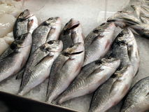 Fisch on the market. Fish at the market in a village in Tenerife Royalty Free Stock Photo