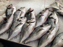 Fisch op de markt Royalty-vrije Stock Foto