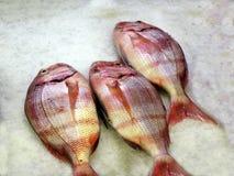 Fisch op de markt Stock Fotografie