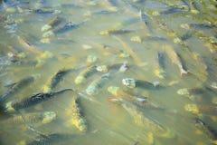 Fisch-Pool Stockbilder