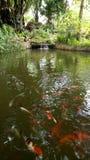 Fisch-Pool Stockbild