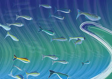 Fisch-Schule Stockfotos