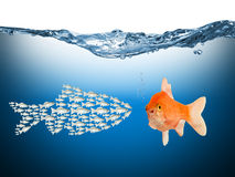 Fisch teamwork concept. A teamwork conecpt with fishes stock photography