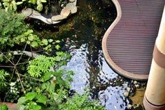 Fisch-Teich Lizenzfreies Stockfoto