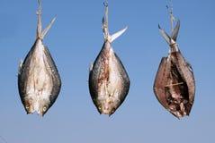 Fisch-Trockner im Sun Lizenzfreies Stockbild