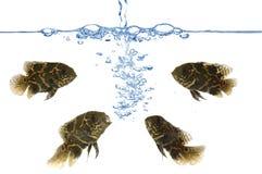 Fisch- und Luftblasen Stockbilder
