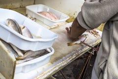 Fisch wird in einen Kiosk geschnitten stockfotografie