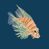 Fisch-Zebra Pterois volitans Stockfoto