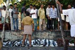 Fischauktion in Kochi, Süd-Indien Stockfoto