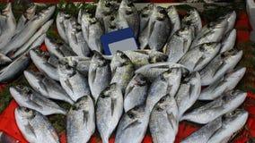 Fischbasar Stockbilder