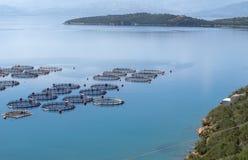 Fischbearbeitung Stockfotos