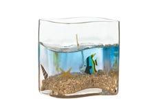 Fischbeckenkerze Stockfoto