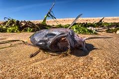 Fische über Meer Lizenzfreies Stockfoto