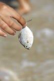 Fische übergeben an Lizenzfreie Stockfotografie