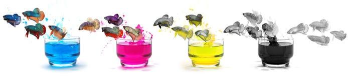 Fische überzogen in der Farbe der Tinte CMYK lizenzfreies stockbild
