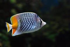 Fische 10 Lizenzfreie Stockfotografie