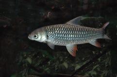 Fische Lizenzfreies Stockbild