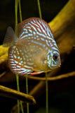 Fische Stockfotos