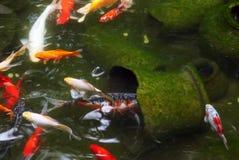 Fische. Stockfotos