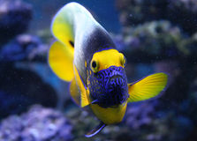 Fische lizenzfreie stockbilder